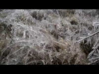 Pioggia ghiacciata: disastro nella foresta ungherese