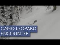 Sciatori australiani s'imbattono in un leopardo delle nevi: è accaduto in India