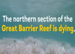 Il drammatico sbiancamento dei coralli australiani: un video per riflettere