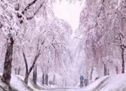 immagine notizia neve tokyo la magia dei fiocchi che si posano sui ciliegi in fiore video