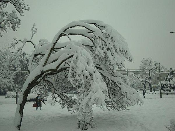 immagine 2 del capitolo 1 del reportage befana davvero speciale calza piena di neve