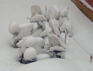 seconda immagine articolo il miracolo della neve a genova si chiama tramontana scura