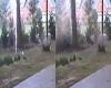 """Fulmine si abbatte sugli alberi e fa """"saltare"""" il terreno: ecco il video"""