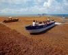 Caraibi, massiccia invasione di alghe mette in fuga i turisti: video