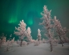 52 gradi sotto zero in Siberia. Novembre freddo ma senza neve a Mosca