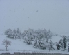 La nevicata record del 17 dicembre 2007 in Sardegna: le immagini più belle