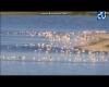 Terribile grandinata in Spagna uccide 300 fenicotteri