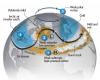 Estremizzazione del Clima: ad Ottobre può venire il GELO? SI