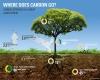 Ecco come i suoli potrebbero contrastare i cambiamenti climatici