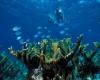 Grande Barriera Corallina devastata dal caldo globale record