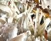 Grotta di Naica: scoperta clamorosa nel luogo più infernale del mondo
