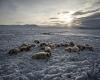 """Mongolia alle prese con il super gelo e lo """"dzud"""", conseguenze gravissime"""