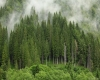 Foreste del pianeta a rischio, potrebbero ridursi causa siccità