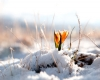 Marzo 2007, la neve di primavera fino in pianura