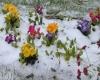Ondate di freddo e neve a fine aprile: i memorabili eventi del passato