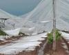 Violenti temporali in Piemonte, furiose ingenti grandinate nel vercellese