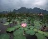 Super spettacolo in Thailandia: torna a fiorire il lago dei fiori di loto