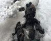 Sono rimasti per ben 75 anni sotto il ghiaccio, incredibile ritrovamento