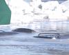 USA, dal gelo siderale alle inondazioni