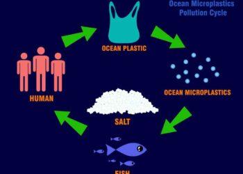 ciclo microplastica 350x250 - Quando scienza e musica sono sulla stessa lunghezza d'onda