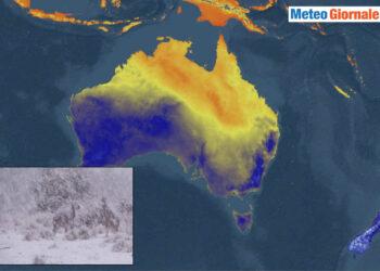 battaglia di canguri sotto la neve 350x250 - Australia, freddo, battaglia di canguri sotto la neve. Video meteo