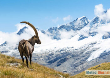 iStock 493221588 350x250 - Viaggio nelle Alpi: foto mozzafiato, la natura senza commenti