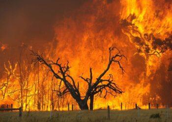 incendio 1 350x250 - Caldo soffocante, meteo estremo d'Africa con incendi su molte regioni