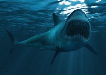 mag1 27 scaled 1 350x250 - Attacco mortale in Australia: squalo bianco uccide surfista
