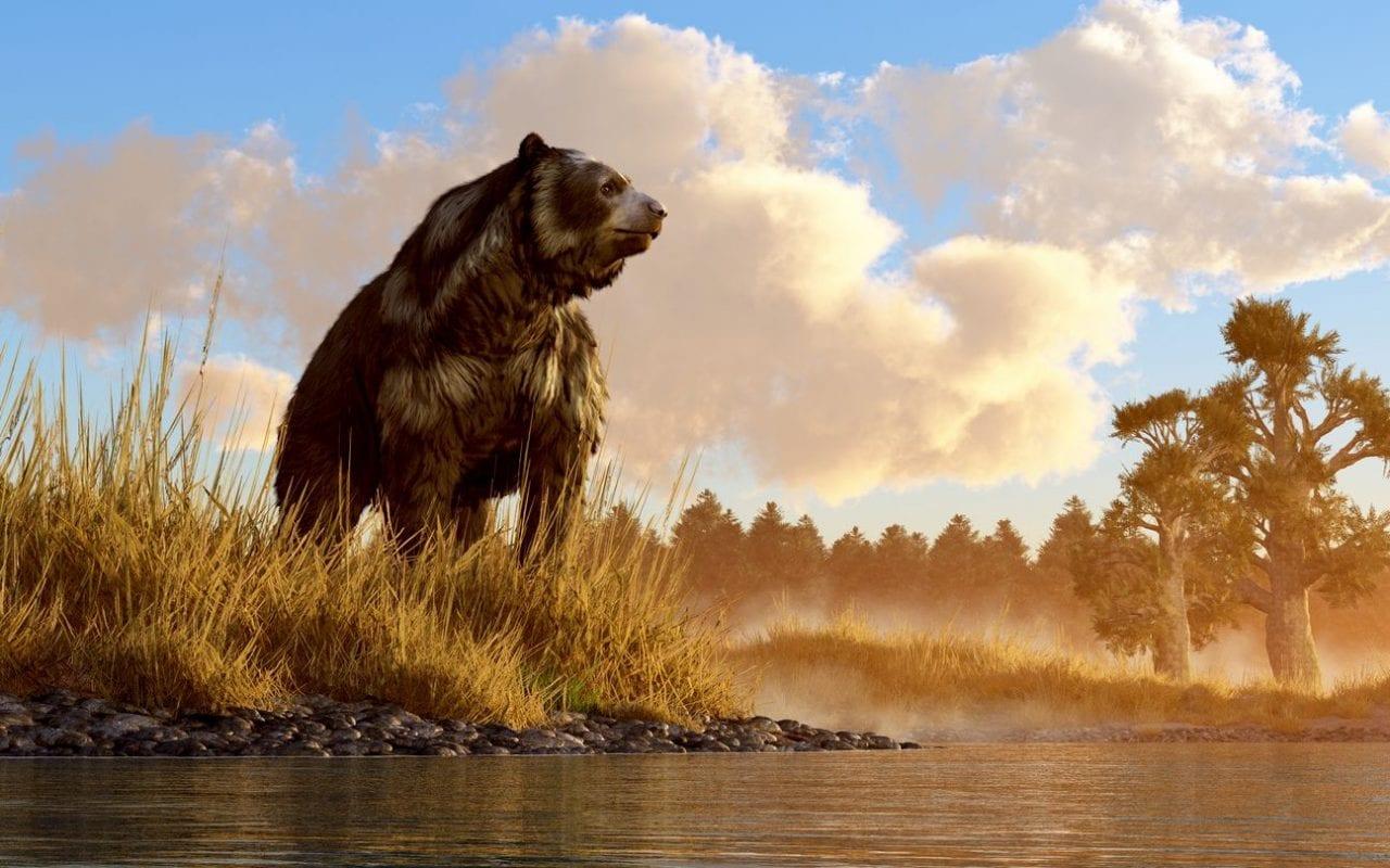 mag1 50 scaled 1 - Incredibile in Siberia: trovato Orso delle Caverne dell'era glaciale