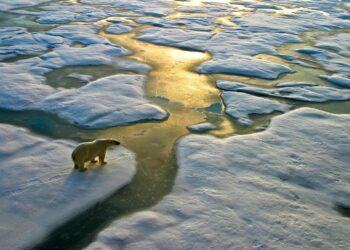 orso polare su ghiaccio in via di scioglimento