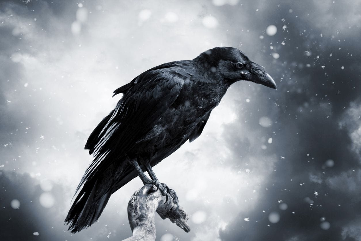 mag1 88 - Nuova scoperta ribalta antiche credenze: anche gli uccelli hanno una coscienza