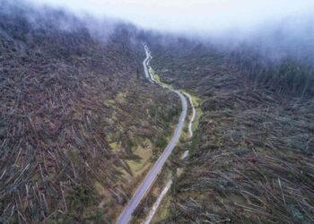 Un'immagine delle foreste distrutte