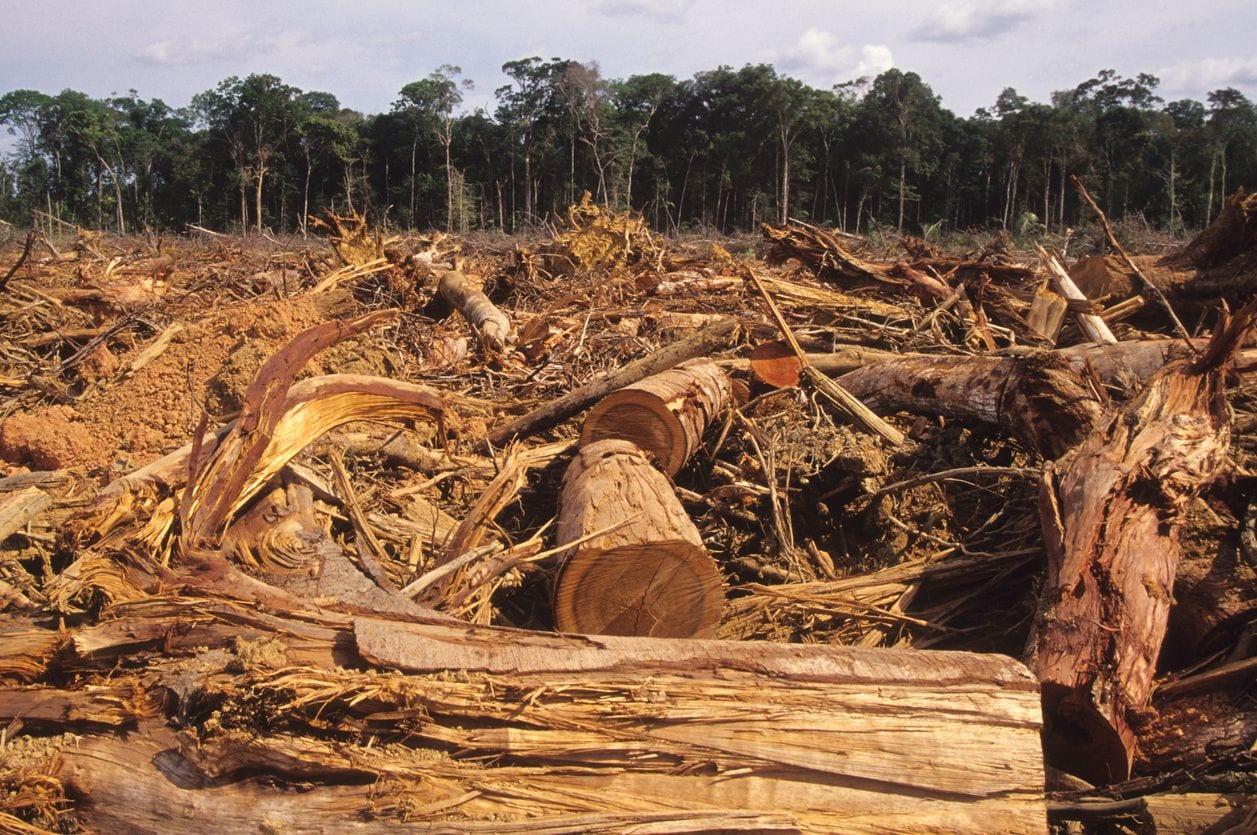 mag1 13 - Foresta amazzonica a rischio scomparsa, il 40% è sull'orlo del collasso