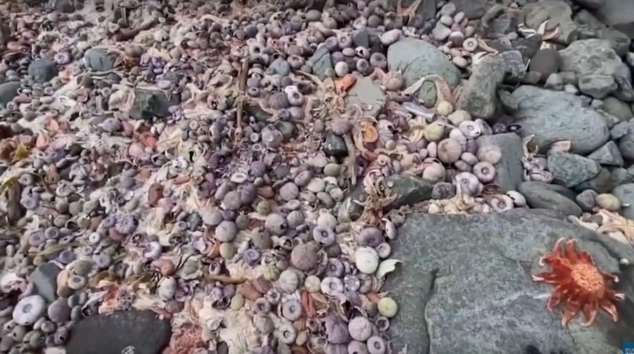 mag2 - Disastro ambientale in Kamchatka, Greenpeace denuncia la strage di animali marini. Video