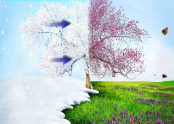 Neve e freddo sulle fioriture anticipate in mezza Europa