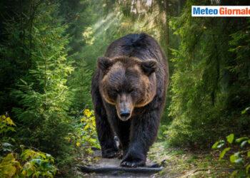 orso artur romania 350x250 - Nelle abitazioni del futuro niente più bollette gas e luce