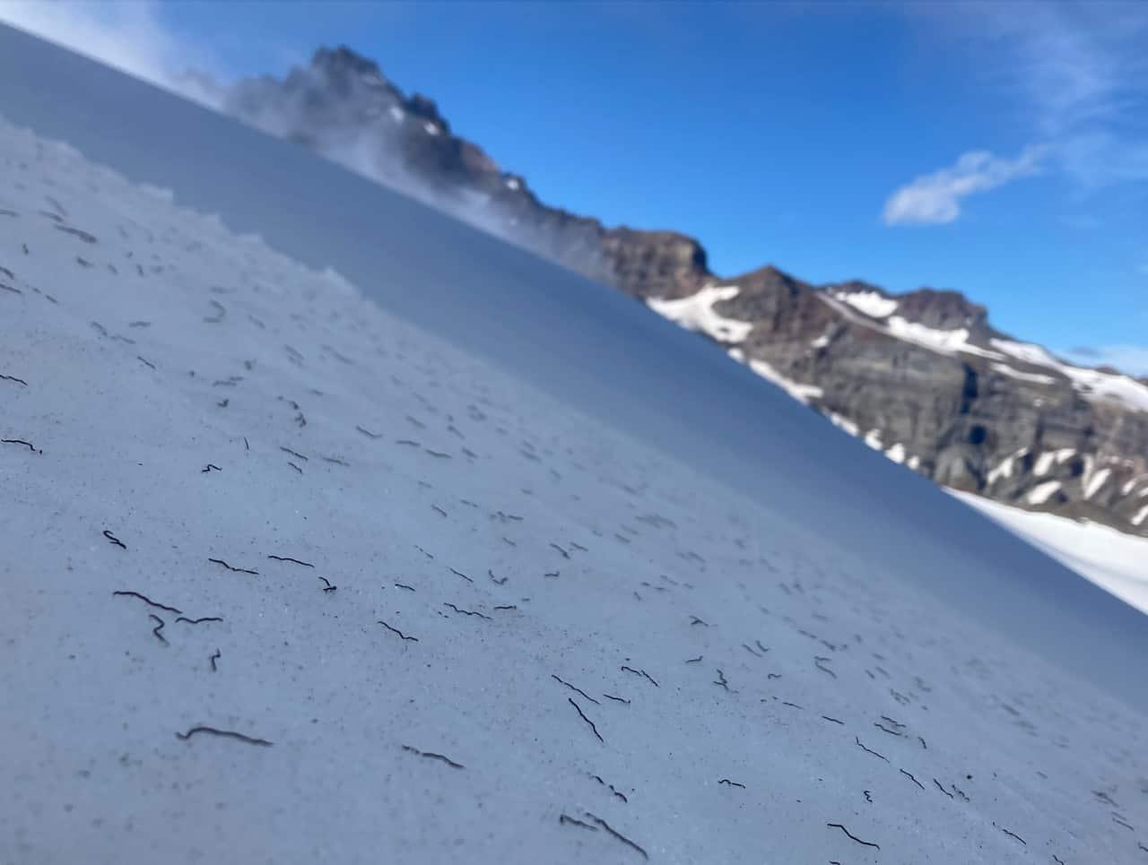 vermi di ghiaccio - Invasione di vermi di ghiaccio nel Nord America, cosa sono